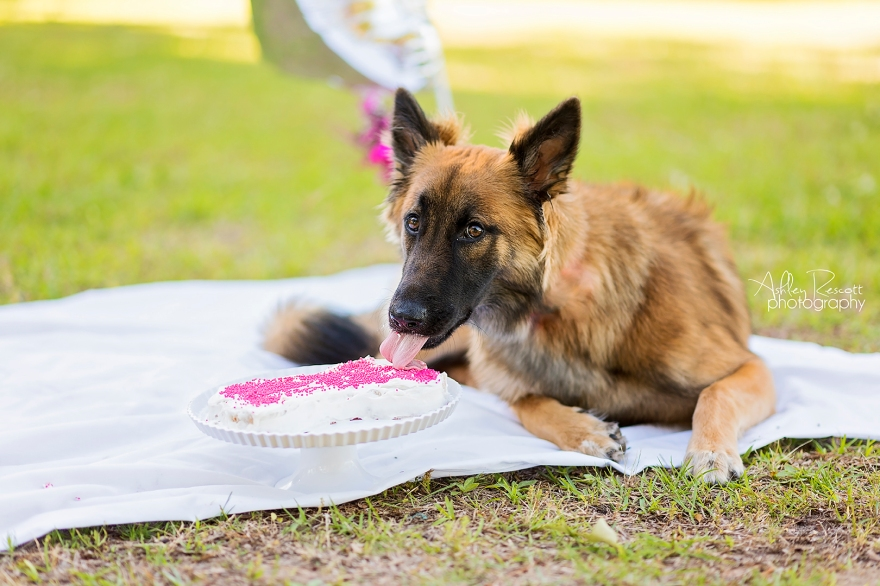 puppy with birthday cake