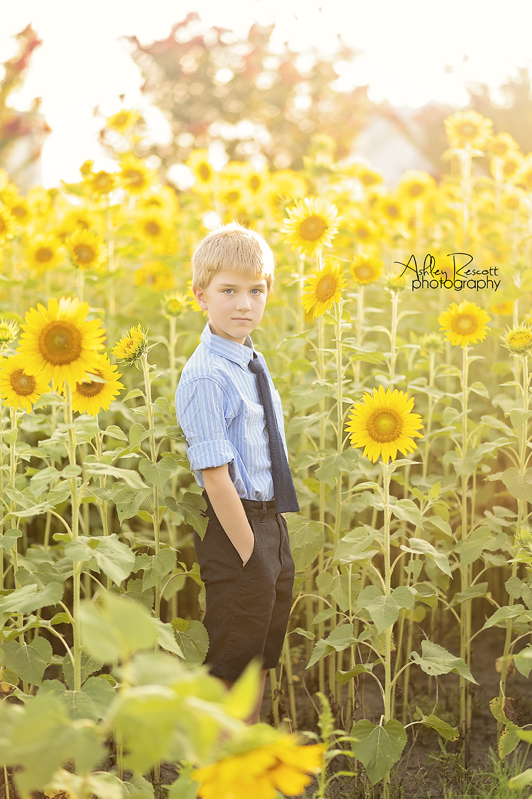 young boy in sunflower field