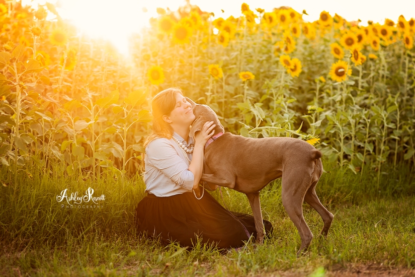 woman getting kisses from her dog in a sunflower field